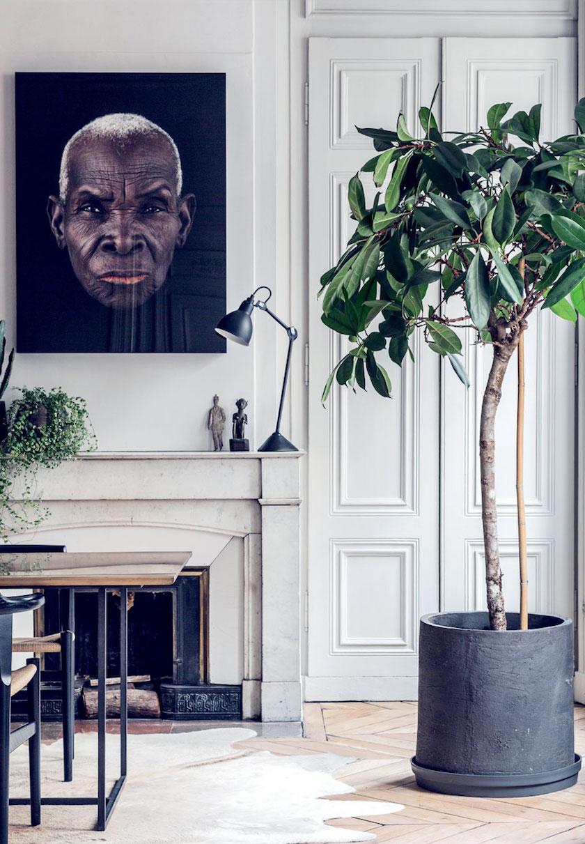 stue-indretning-plante-trae-botanisk-MlXZ_X0dDKAH4_Qqz-45Jw